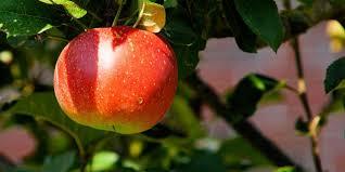 should you prune your fruit trees in the fall fielding tree and