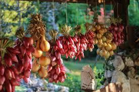 cuisiner le fruit de l arbre à images gratuites arbre fruit fleur aliments cuisine