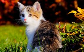 beautiful kitten wallpapers 1920x1200 2075080