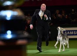boxer dog crufts 2015 crufts 2015 best in show daily record