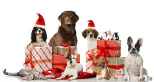 pet christmas five tips to keep your pets safe this christmas pet community center