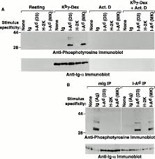 tcr induced transmembrane signaling by peptide mhc class ii via