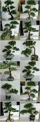 sjh100566 small decorative pine trees artificial old bonsai tree