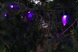 tree of glows purple following shine the light launch in