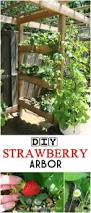 diy trellis arbor 484 best garden trellis u0026 structures images on pinterest
