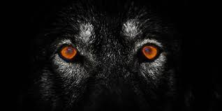 halloween wolf background the lone wolf terror trap huffpost