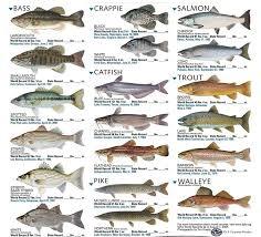 freshwater aquarium fish list aquarium images