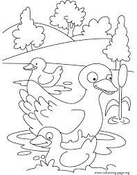mother duck ducklings coloring animals coloring