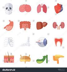 Female Anatomy Organs Male Female Anatomy Vector Illustration Set Stock Vector 627662120