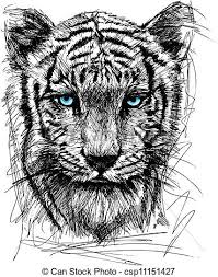 vector illustration of sketch of white tiger csp11151427 search