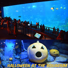 aquarium halloween guided tours s e a aquarium ed unloaded com parenting