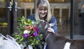 flower delivery service goatgrams flower delivery service s goats eat the bouquet
