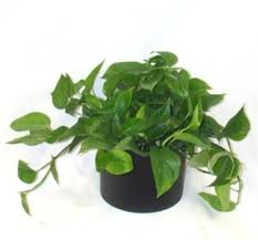 low light plants for office low light plants for office attractive low light plants low light