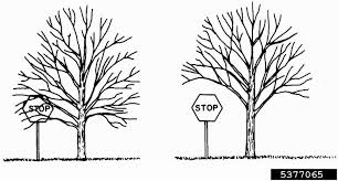 For A Tree Tree Trimming Pruning Guide Tips Techniques For Trimming Trees