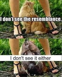 Looking Up Meme - looking up a woman s dress cat and beaver dump a day