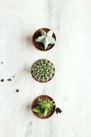 diy mini cacti garden in a pot the elgin avenue