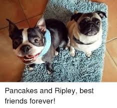 Friends Forever Meme - pancakes and ripley best friends forever friends meme on sizzle