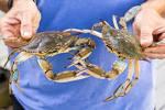"Image result for ""blue crab"""