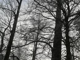 black trees by whitelittleaster on deviantart