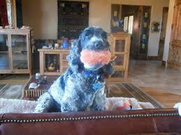 purrfect pet nanny llc in home pet sitting dog sitting pet