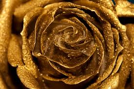 gold roses golden photo digital photography