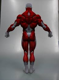 Full Body Muscle Anatomy 220 Best Anatomy Images On Pinterest Anatomy Reference Drawing