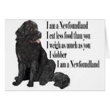 newfoundland greeting cards zazzle