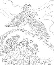 free printable coloring page alaska state bird and flower
