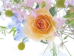 *•~-.¸¸,.-~*زهور اسلاميه*•~-.¸¸,.-~* images?q=tbn:ANd9GcQWcOs-A-eFqi1Wnva8PDLL19UCcD0vRxRL2Q_LJckszZeU8lZXCQ