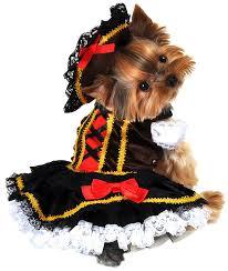 Yorkie Costumes Halloween Pirate Costumes Dogs Halloween Wikii