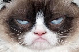 Grumpy Face Meme - grumpy cats face blank template imgflip