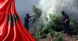 Wildfire Weed by Cannabis In Albania