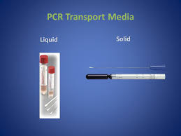 bureau pcr validity of polymerase chain reaction liquid transport media