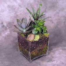 succulent garden kremp com