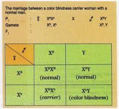 Examples Of Color Blindness Color Blindness Hemophilia Brown Teeth Drosophila Melanogaster