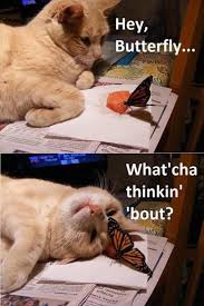 Thinking Cat Meme - hey butterfly whatcha thinking about cat memes and comics