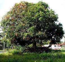 Mango Boom weblog afrika 盪 archief 盪 de mangoboom