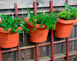 a vertical herb garden for home cooking