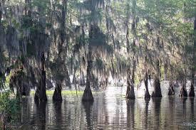 Louisiana forest images Louisiana wetlands jpg