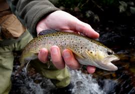 colorado fly fishing reports fly fishing stories u0026 essays 2