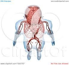clipart of a 3d aerial view of a human skeleton with visible