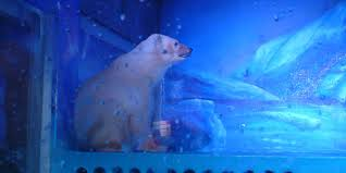 Two Polar Bears In A Bathtub Petition Help Polar Bears At The Saddest Zoo In The World