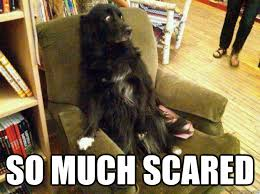 Memes Scared - so much scared so much scared quickmeme