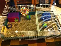 Cages For Guinea Pigs Guinea Pig Reglan Life Lessons From A Guinea Pig