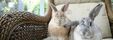 rabbit advice tips health information rspca
