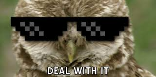 Funny Owl Meme - deal with it owl gif weknowmemes