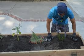 Advantage Of Raised Garden Beds - raised bed gardening plant california
