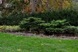 What Are The Gardening Zones - hortus 5 journal garden bloggers u0027 bloom day october 2012