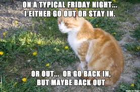 Friday Night Meme - okcupid cat meme on imgur