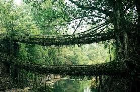living bridges in the land of clouds u2013 meghalaya india travel